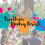 Trentham Monkey Forest review blog and youtube video